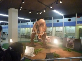 京都市青少年科学センター 恐竜