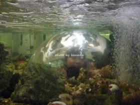京都市青少年科学センター 水の中を覗く