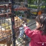 大阪観光 天王寺動物園 しか