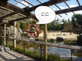 天王寺動物園 象