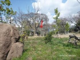 大阪観光 天王寺動物園 キリン
