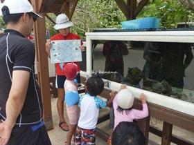 ルネッサンスリゾートオキナワ えい先生のお魚教室