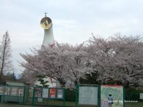 万博記念公園 花見1