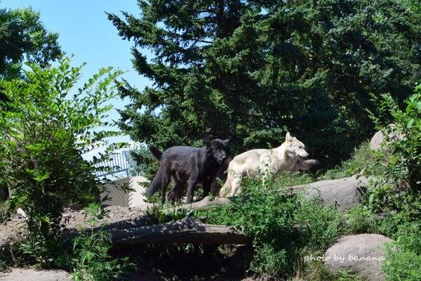 旭山動物園 北海道家族旅行記ブログ 子どもと一緒 おすすめ