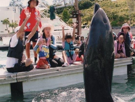 沖縄 イルカふれあい ルネッサンス